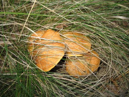 #grzyby #jesień #las #przyroda
