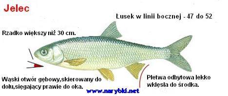 images31.fotosik.pl/141/042c6279d5e12c98.jpg