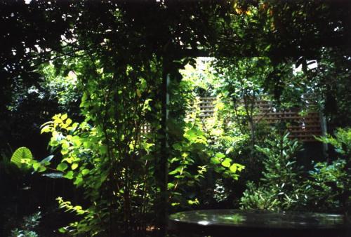 Nasz tylny ogródek w dzień