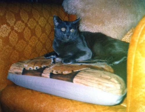 Szymon, ruskibłękitny, który uwielbiał muzykę i mnie