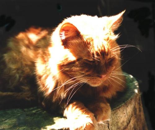 Rudy w słońcu