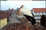 http://images31.fotosik.pl/166/41bce0f82f0e9eb3m.jpg