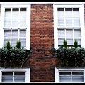 #Szyby #budynek #okna #kwiatki #miasto #architektura