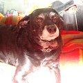 To nie jest źle zfotografowane zdjęcie, zrobiłam ten efekt zasłaniajac ręką z rozszerzonymi palcami lampę błyskową #pies #piesek #pieseczek #piesio #zwierzęta #beja #bejka #mój