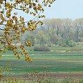 Warta, łąki, widoczek, krajobraz #Warta #krajobraz #widok
