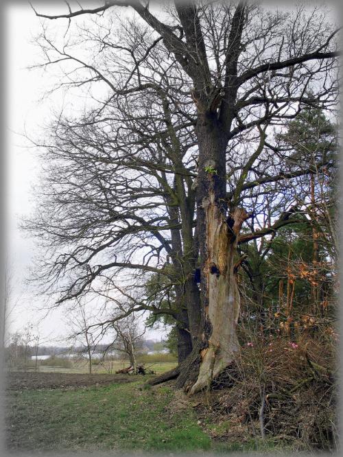 #drzewa