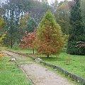 Jesień w ogrodzie dendrologicznym. #drzewa #jesień #przyroda #OgródDendrologiczny