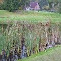 Domek na tle oczka wodnego w Ogrodzie Dendrologicznym w Glinnej. #domek #woda #przyroda #jesień #OgródDendrologiczny