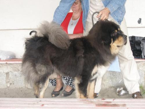 #Zwierzęta #zwierzę #ssaki #ssak #psy #pies #wystawa #sudecka #psów
