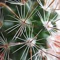 Kaktusik ;) #kaktus #kwiat #kwiaty #kolce