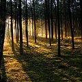 iść w stronę słońca ... #świt #las