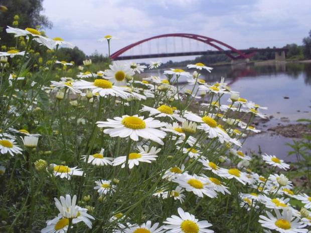 kwiatki (?) #kwiatki #most