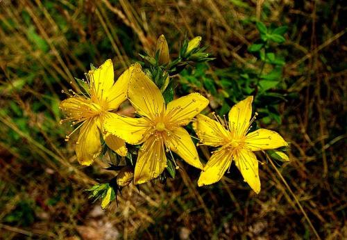 #kwiatki