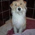 psica Diana #zwierzęta #pies #psy #kundel