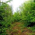 #Ślęża #Sobótka #las