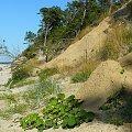 #bałtyk #klif #plaża #krajobraz #wakacje #lato #widoki