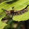 owady, makro, macro, ważki, nasionka #owady #makro #macro #ważki #nasionka