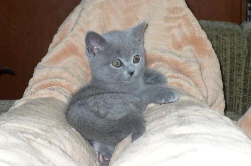 """"""" W domowych pieleszach"""" #zwierzeta #kot"""