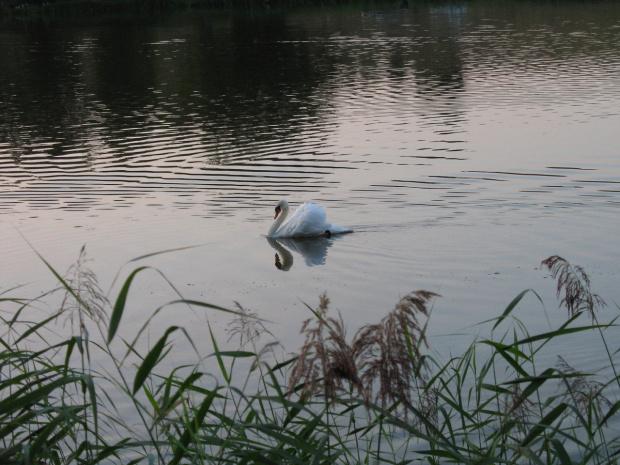 #woda #zalew #zachód #natura