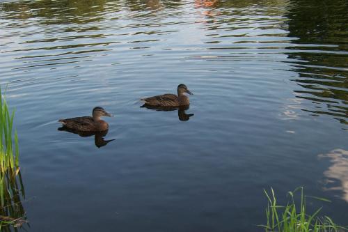 Zwierzyniec #kaczki #jezioro #staw
