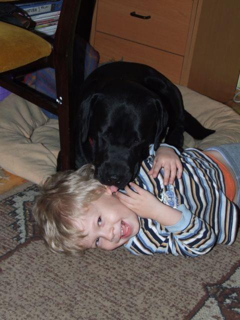 Drukuj Stronę Psy