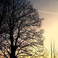 Jesienny zachód słońca #ZachódSłońca #drzewa #drzewo #niebo #jesień #grudzień