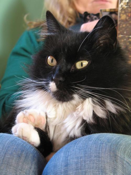 Fizia-koteczka przygarnięta z ulicy #kot #koty #kicia