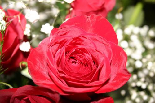 #roze #kwiaty #kolory