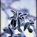 #mroz #zima #rosliny