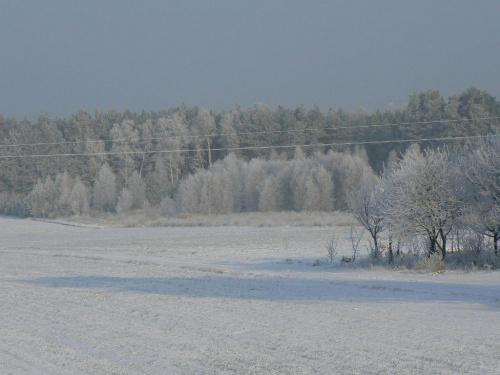 -20*C #zima #mróz #krajobraz #las #widok