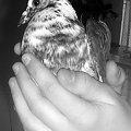 ...ale gdy sobie odpoczął, poleciał dalej. #ptak #ptaki #dłonie