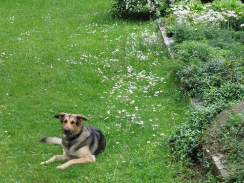 Lorka pies nasz obronny . . .