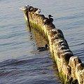 Zdjęcia Morza Bałtyckiego - Grzybowo, Kołobrzeg #MorzeBałtyckie #morze #Bałtyk #Grzybowo #Kołobrzeg
