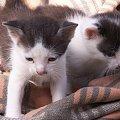 Moje kotki #kotki #podwórko #wieś #małe